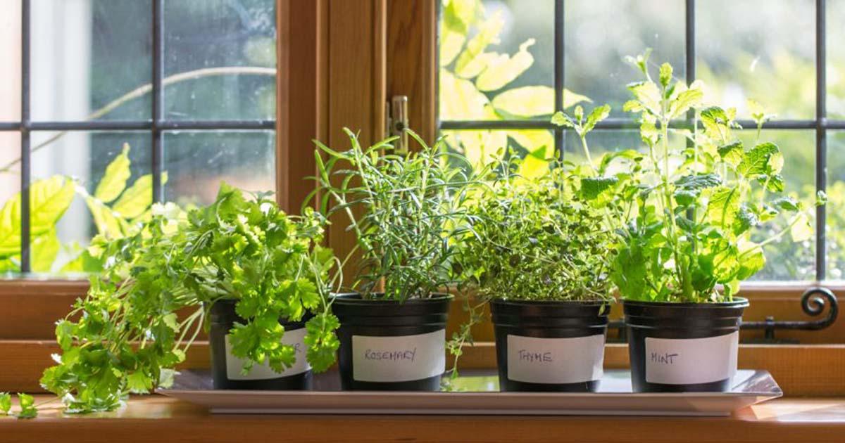 Полезные растения выращивание дома 56