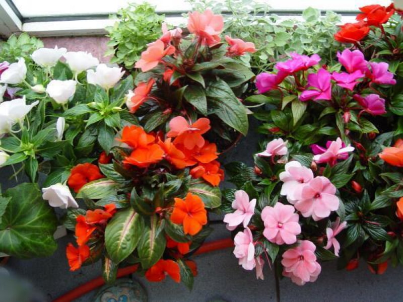 10 самых неприхотливых комнатных цветов, цветущих круглый год